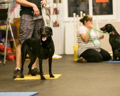 Indoor Dog Training