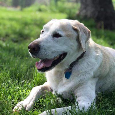 older dog boarding