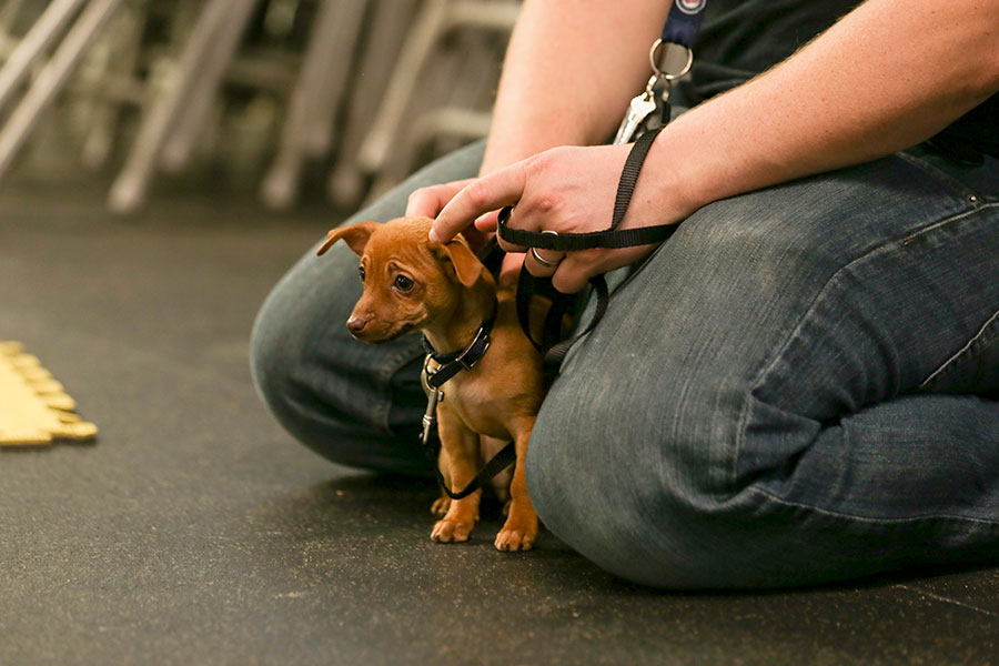 Paws Inn Puppy Training