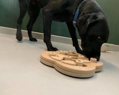 Dog Treat Puzzle