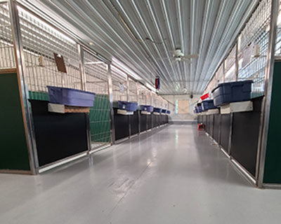 Dog Boarding space