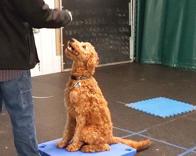 Dog Training Center