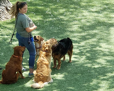 Outdoor play for dogs